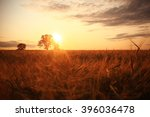Summer Landscape With A Lone...