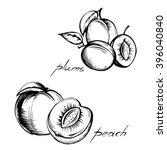 set of vintage images of fruits ... | Shutterstock .eps vector #396040840