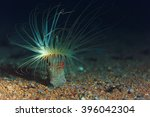 Small photo of actinium animal underwater photo