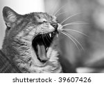 yawning cat | Shutterstock . vector #39607426
