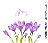 spring violet crocuses on white.... | Shutterstock .eps vector #396098368