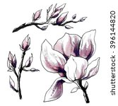 pale pink magnolia flower in... | Shutterstock . vector #396144820
