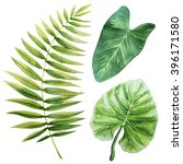 tropical leaves. watercolor... | Shutterstock . vector #396171580