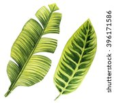 tropical leaves. watercolor... | Shutterstock . vector #396171586