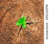 plant seedling growing in tree...   Shutterstock . vector #396210598