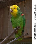 single green parrot sitting on... | Shutterstock . vector #396250318