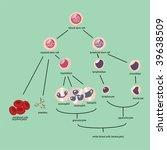 blood cells vector | Shutterstock .eps vector #39638509