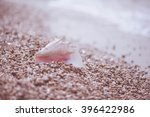 on the beach against the sea... | Shutterstock . vector #396422986