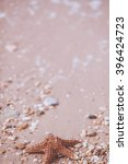 starfish on a sand background | Shutterstock . vector #396424723