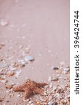 starfish on a sand background | Shutterstock . vector #396424744