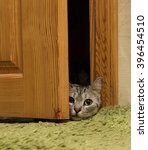 naughty cat playing at home... | Shutterstock . vector #396454510