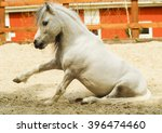 white pony with long fluffy... | Shutterstock . vector #396474460