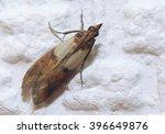 indian meal moth   Shutterstock . vector #396649876