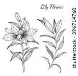 lily flowers from hand drawing... | Shutterstock .eps vector #396714760