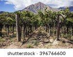 El Cafayate Vineyards With...