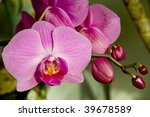 bloom flower | Shutterstock . vector #39678589