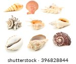 sea shells isolated on a white  ... | Shutterstock . vector #396828844
