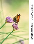 Small photo of Orange-black tortoise butterfly(Vanessa urticae) on a lilac flowers chives(Allium schoenoprasum) on a blurred yellow background, close-up. Selective focus