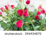 Red Rose Soft Green Background