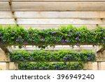Purple Hedge Flower  Weeping...