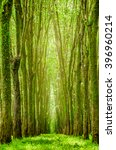 Soft Focus Tunnel Of Tree Wit...
