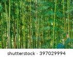 bamboo forest | Shutterstock . vector #397029994