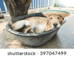 golden retriever dog in a small ... | Shutterstock . vector #397047499