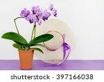 Orchidaceae Phalaenopsis  Or...