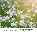 spring flowers  | Shutterstock . vector #397217776