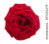 Stock vector red rose with water drops on a white background 397231279