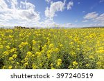 close up shot on canola flowers | Shutterstock . vector #397240519