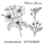 hibiscus flowers vector by hand ... | Shutterstock .eps vector #397310839