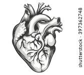 human heart drawn in engraving... | Shutterstock .eps vector #397362748