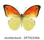 Color Butterfly Hebomoia...