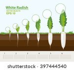 vector illustration. phases and ... | Shutterstock .eps vector #397444540