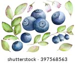 watercolor bilberry painted... | Shutterstock . vector #397568563