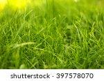 natural green grass background | Shutterstock . vector #397578070