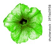 Small photo of Green althea flower macro isolated on white