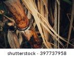 Sugarcane.close Up Sugarcane...