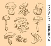sketches of forest chanterelles ... | Shutterstock .eps vector #397767328