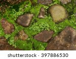 The Green Moss On The Rocks