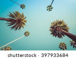 redeo los angeles vintge palm... | Shutterstock . vector #397933684