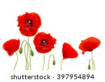 red poppies  common names ... | Shutterstock . vector #397954894