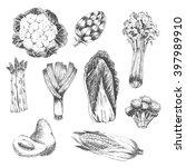 vector vegetable hand drawn...   Shutterstock .eps vector #397989910