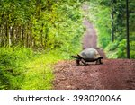 Stock photo galapagos giant tortoise crossing straight dirt road 398020066