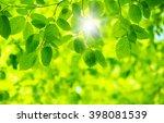 green leaves on the green... | Shutterstock . vector #398081539