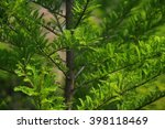 closeup of green tree leaves at ... | Shutterstock . vector #398118469