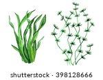 watercolor green seaweed  grass ... | Shutterstock . vector #398128666