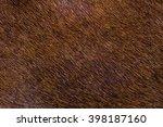 Fur Skins Of Horses