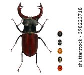 Small photo of Beetle of Lucanus cervus (Lucanidae) and various ladybugs (ladybird beetles). Isolated on a white background. Small versus big size (parameter) of insects concept